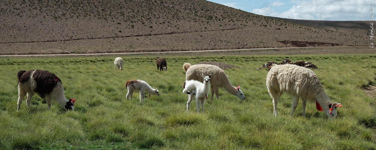 couv bilan 3 semaines Bolivie