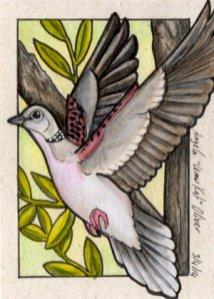 030414-dove