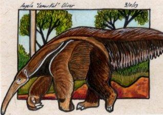 031113-anteater