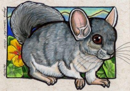 200114-chinchilla