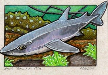290314-dogfish