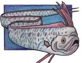 oarfish