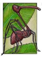 pelicanspider