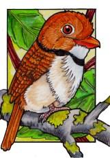 puffbird