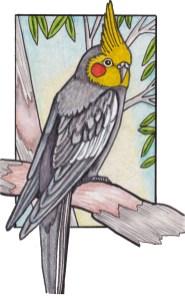 quarrion-cockatiel