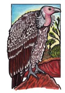 vulture2