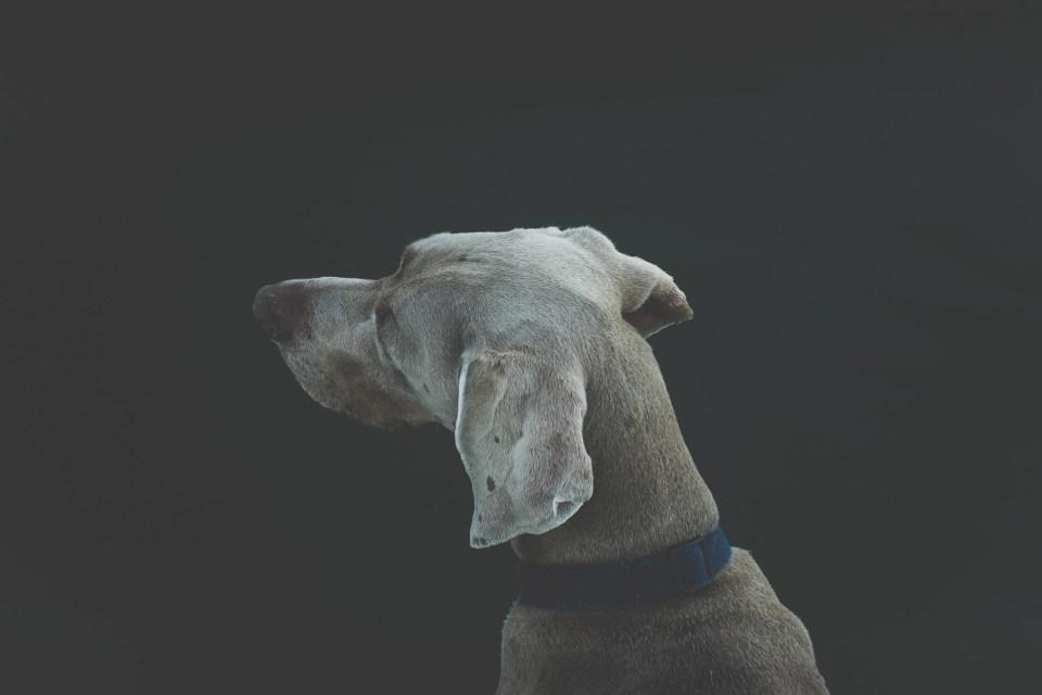jak fotografować zwierzęta
