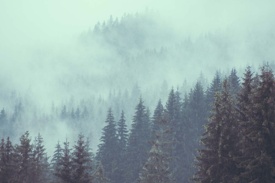 jak fotografować we mgle