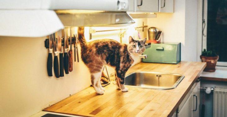 Découvrez toutes nos astuces pour décorer votre cuisine