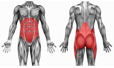 Visión anatómica de los músculos que forman el core