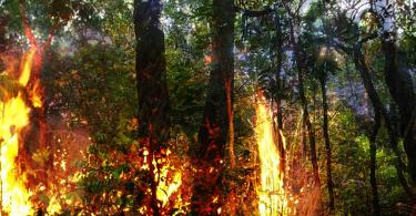 photo of Amazon rainforest Lidar Used to Document Amazon Deforestation