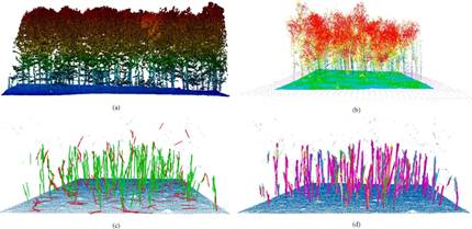 images of Lidar Survey Key to Improving Tree Segmentation