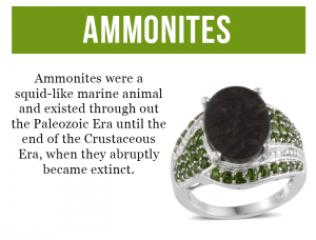 Rare and Exotic Gemstones - Canadian Ammolite - Ammolites