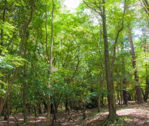 心地良い気の流れる森