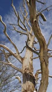 a fairly dead tree