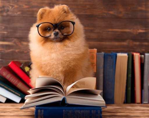 cachorro-para-apartamento-cachorro-comportado-loft