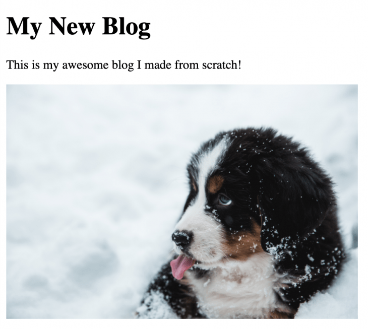 The homepage of our Gatsby blog with a picture of a dog.