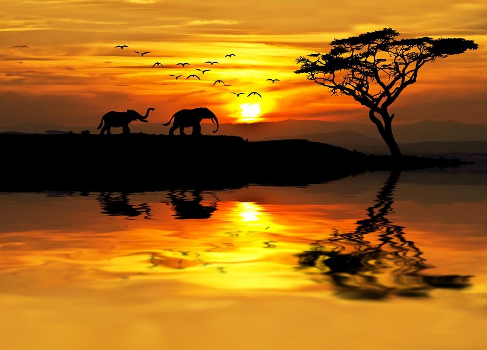 Elefanti al tramonto in Africa