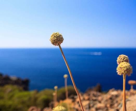 sicilia mare