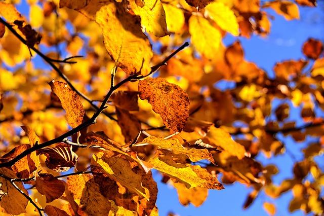 autunno gita fuori porta