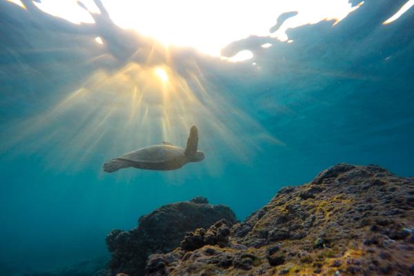 tartaruga marina nel mare