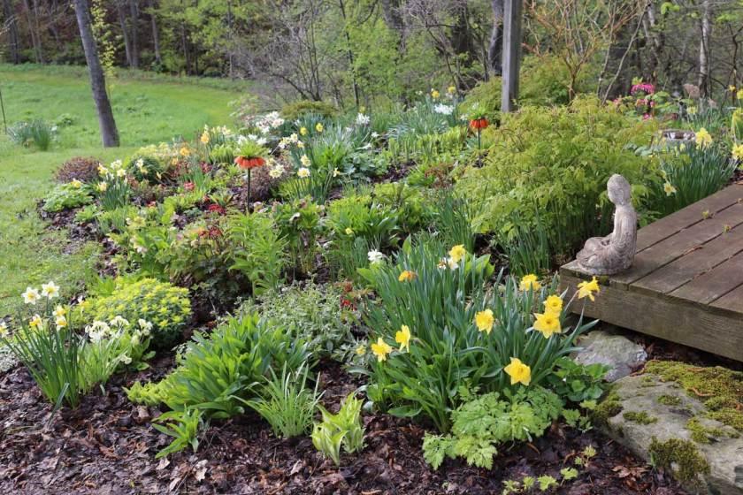 Best-Companion-Plants-For-Hostas—Longfield-Gardens