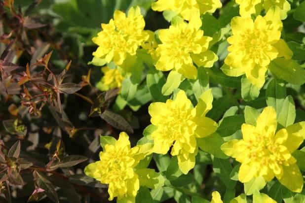 Best Companion Plants for Hostas - Longfield Gardens