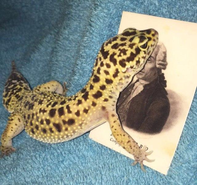 lizard2_IMG_6898