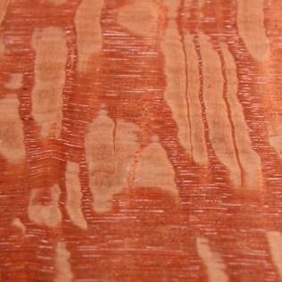 Australian silky oak