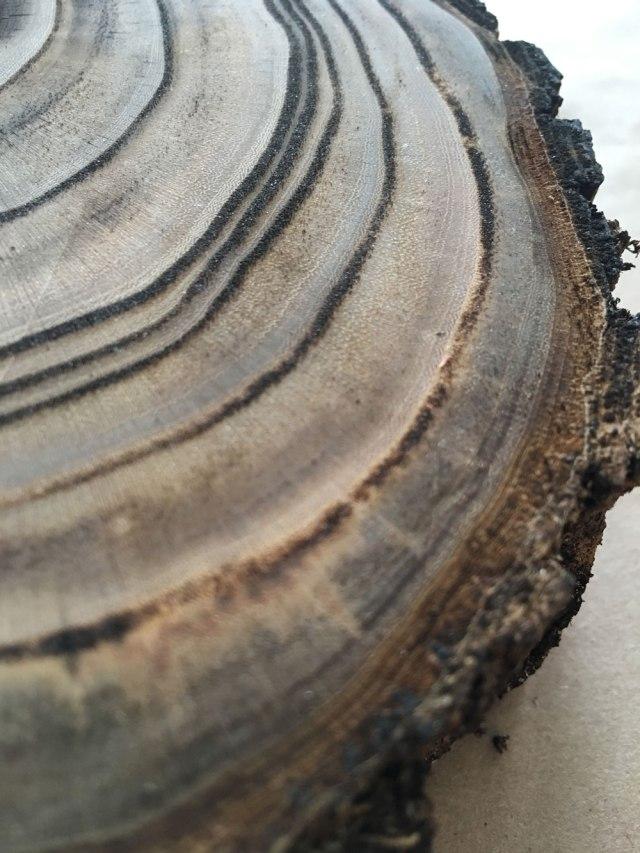 tree_burn_IMG_0875