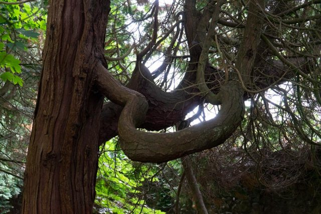 st-fagans-curved-branch-DSC00190