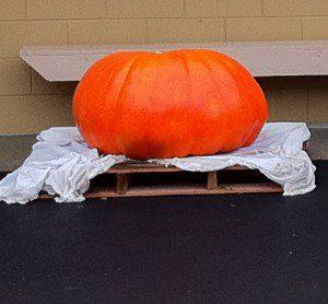 Most Beautiful Pumpkin 2011 - Half Moon Bay World Championship Pumpkin Weigh-Off