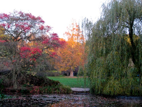Seasonal colors at Isabella Plantation, Richmond Park, London - © L. Silberstein