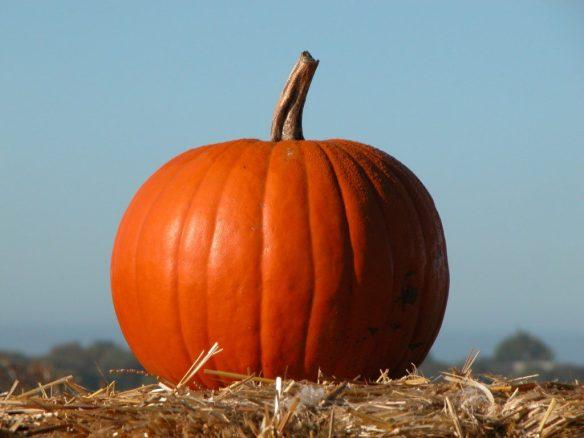Fall Events include Halloween Pumpkins