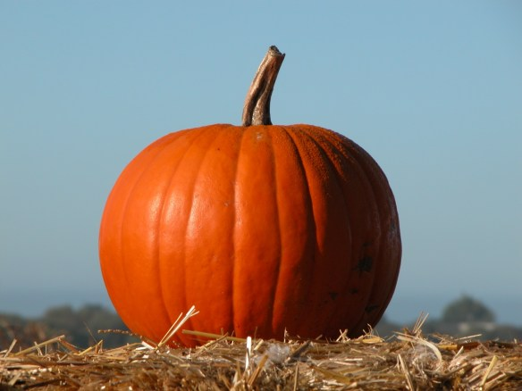 Fall Events include Halloween Pumpkins