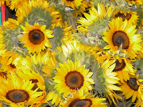 Sunflowers © LoveToEatAndTravel.com