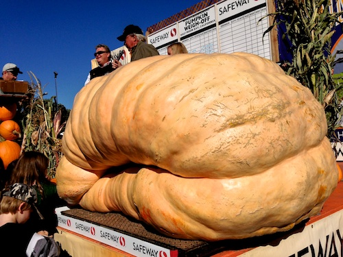 Half Moon Bay World Championship Pumpkin Winner 2013 – © LoveToEatAndTravel.com