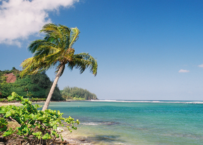 Hawaii Beach and Palm Tree - Photo Credit iStock
