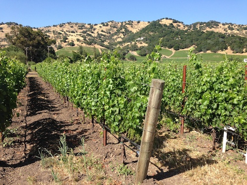 Napa Valley vineyard, Napa Valley Wine Country, CA – © LoveToEatAndTravel.com