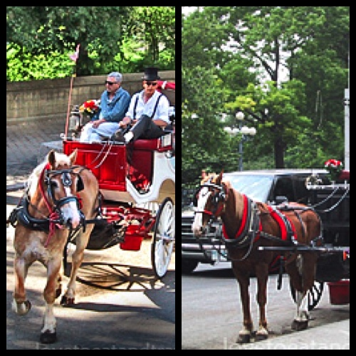 Central Park Horse & Carriage Rides, New York City – © LoveToEatAndTravel.com