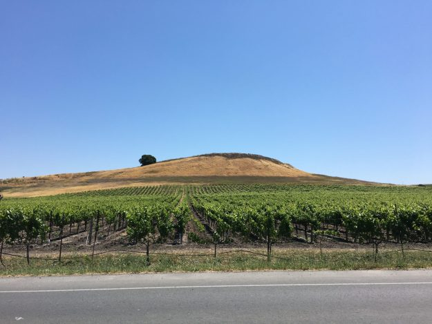 Napa Valley vineyard across from Hwy 92 Cafe – © LoveToEatAndTravel.com