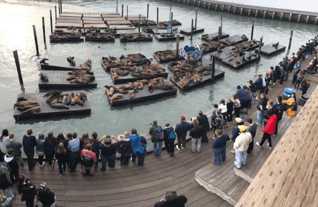 San Francisco Pier 39 Sea Lions - photo © LoveToEatAndTravel.com