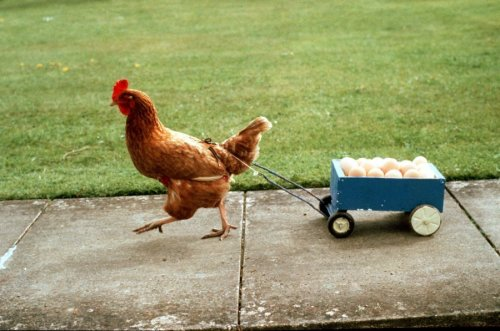 Chicken_with_Cart