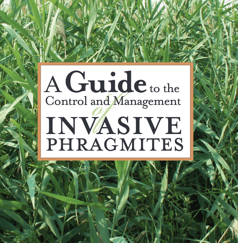 A Guide To The Control And Management Of Invasive Phragmites