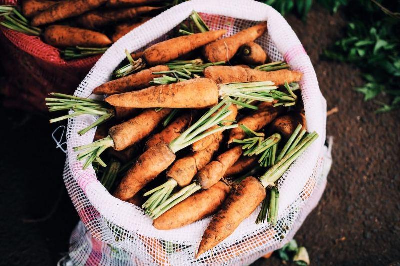 frisch geerntete Karotten in einer Tüte