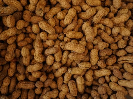 Viele Erdnüsse
