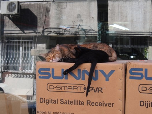 sleepy kitty in istanbul