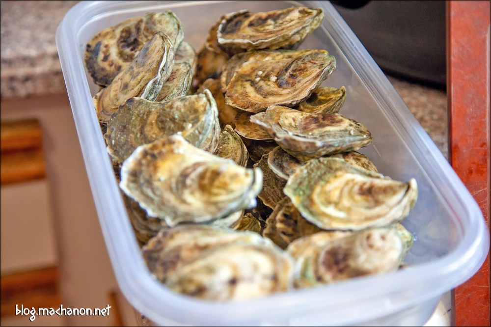 Aunt Dotty oysters stacked in a 76 oz. Tupperware container.