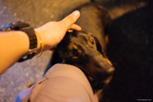 Luke the dachshund