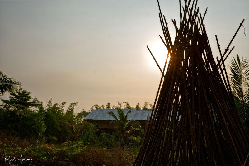 Sunrise at the bamboo farm